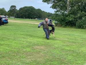 Officer in a bite suit with a K9 patrol dog attacking the officer.